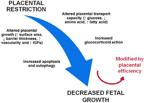 causes of decreased blood supply to placenta picture 12