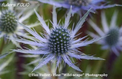 tim thistle picture 6