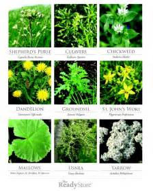herbal plants picture 10