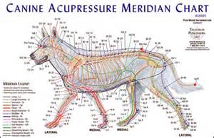 canine pain relief therapy picture 2