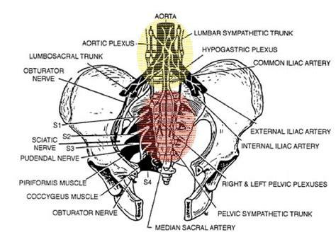 facet joint disease picture 15