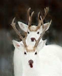 chemically neuter white tail deer picture 11