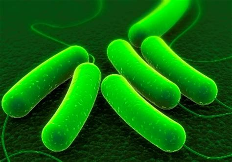 what herbal supplement kills e.coli picture 11