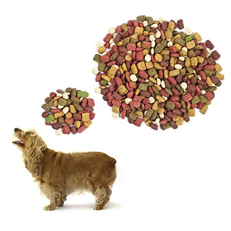 canine diet picture 10