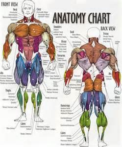 exercises to build fast twitch muscle picture 5