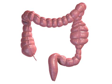 colon picture 1
