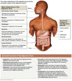 digestion overview picture 7