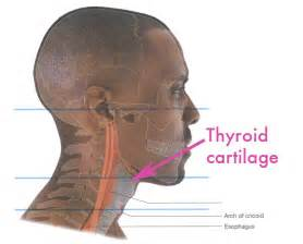 esophogus and thyroid picture 15