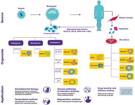Colon cancer treatment picture 12