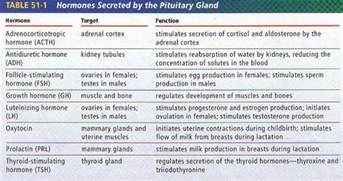 anterior pituitary picture 2