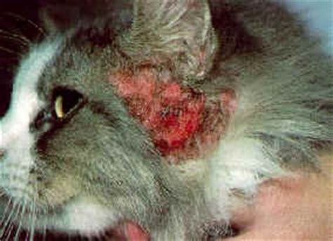 cat health dry skin picture 6