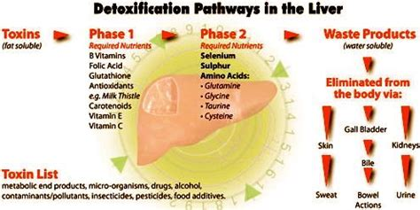 phase l & ll liver detox picture 2