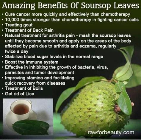 can soursop leaves cure fibroid picture 2