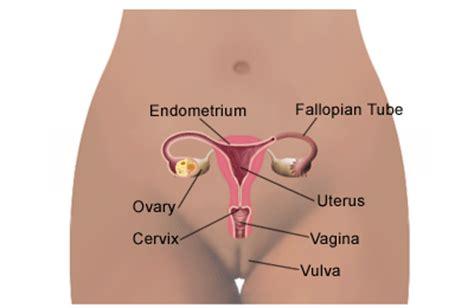 herbal na gamot para sa may ovarian cyst picture 7