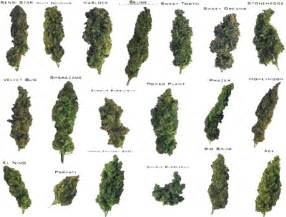 what parts of the maryjane plant do you picture 11