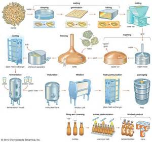 brewers yeast picture 6