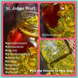 st. john's wort for insomnia picture 2