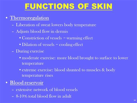 functions of skin picture 18