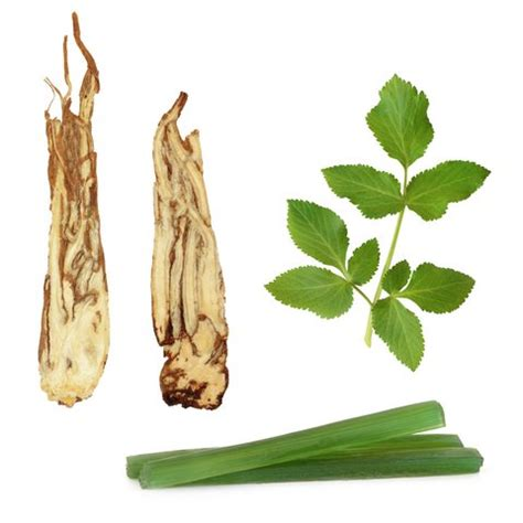 astragalus for appetite stimulant picture 2