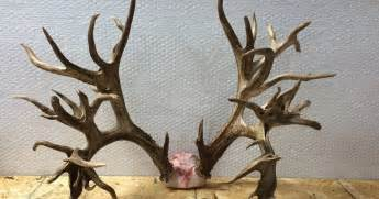 100,000 antler picture 1
