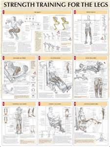 muscle building exercises for legs picture 5
