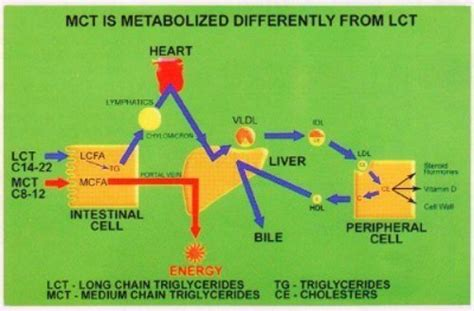safflower oil medium chain triglycerides picture 10