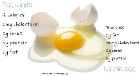 Cholesterol myths picture 6