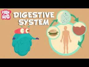 a kids understanding to digestion picture 14