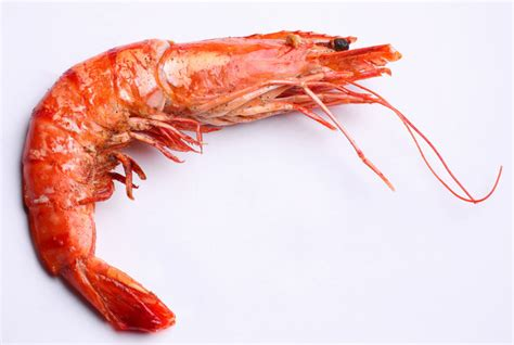 High cholesterol and shrimp picture 3