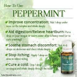 peppermint essential oil picture 5