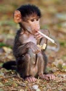 3 monkeys smoke picture 6