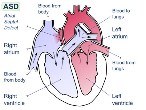 blood flow through reptilian heart animation picture 1
