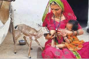 deer feeds human breast in india picture 2
