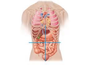 abdominal picture 3