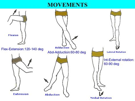 joint movements anatomy picture 9