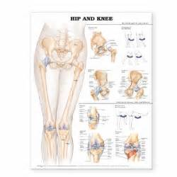 diagram of knee joint picture 11