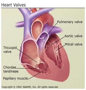 erectile dysfunction and aortic heart valve picture 6