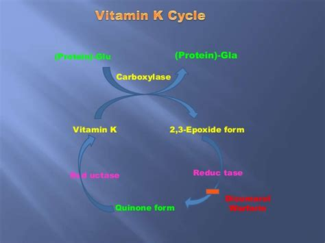 vitamins that are synthesized in the intestinal bacteria picture 6