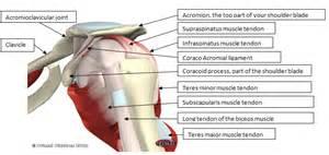 shoulder pain relief picture 13