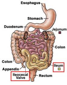 5 digestive sphincters picture 1