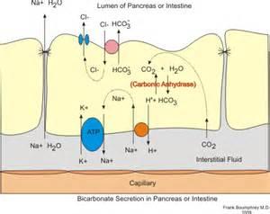 secretion picture 7