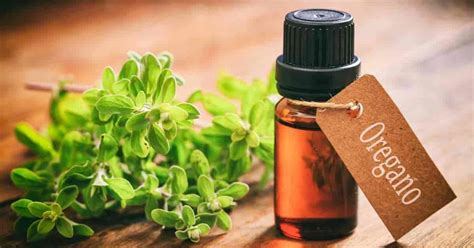 can you use oregano oil as a lip picture 9