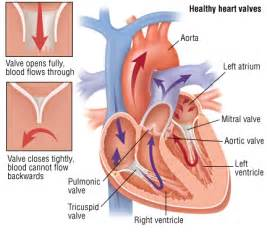 enlarged mitral valve herbal treatment picture 5