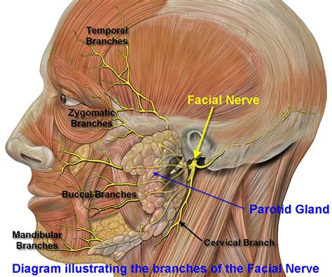 swollen lymph nodes after surgery? picture 13