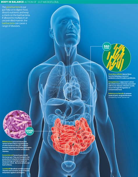 bacterial infection intestines picture 1