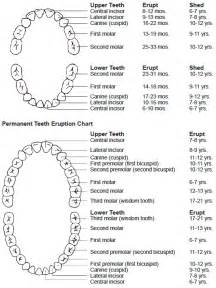 primary teeth eruption picture 2