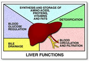 what is the function of the liver picture 9