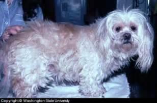 dog skin health picture 14