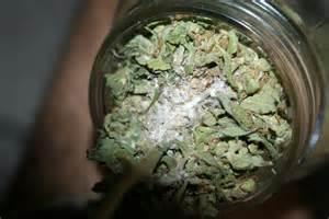 marijuana fungus picture 3