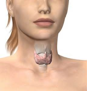 hypothyroid and cramps picture 3